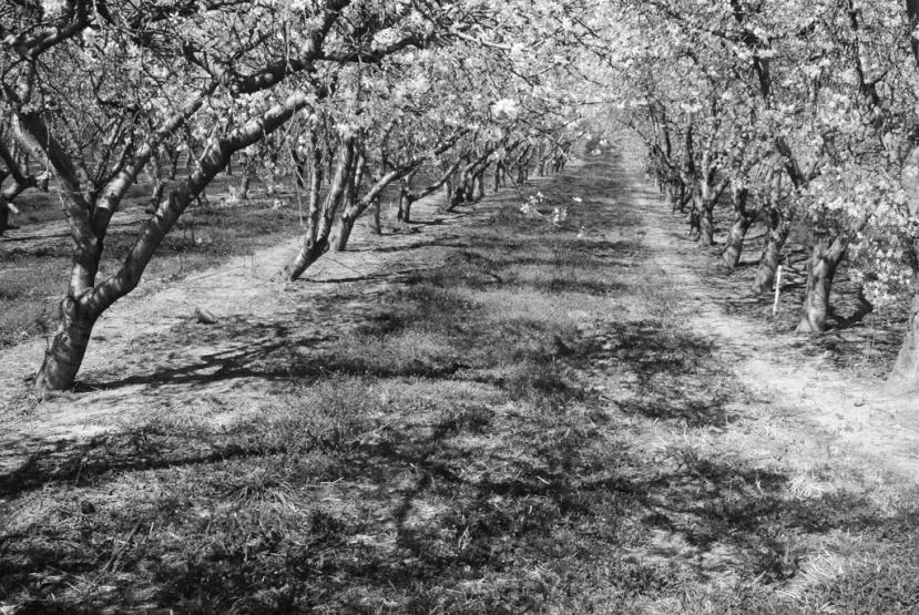 apple31.jpg